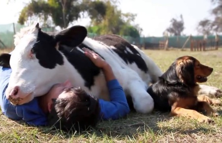 amore-per-animali-1